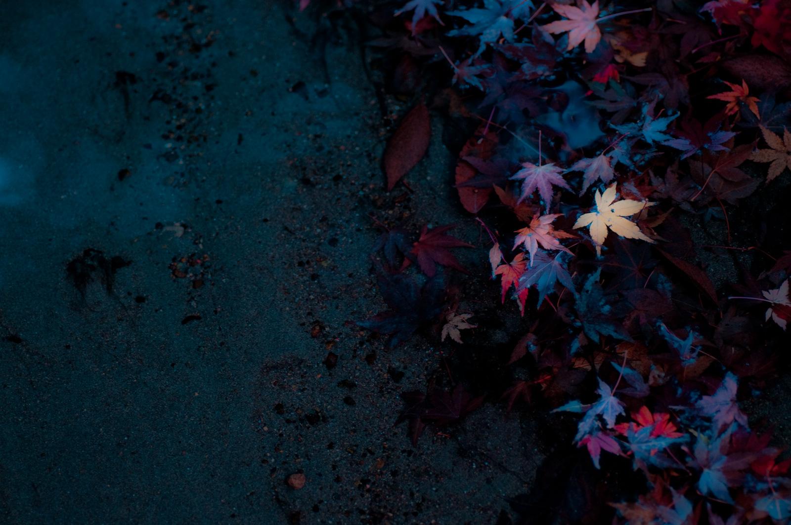 2017年、今年の秋はどこの紅葉を撮りに行ってみようかな【関東周辺編】