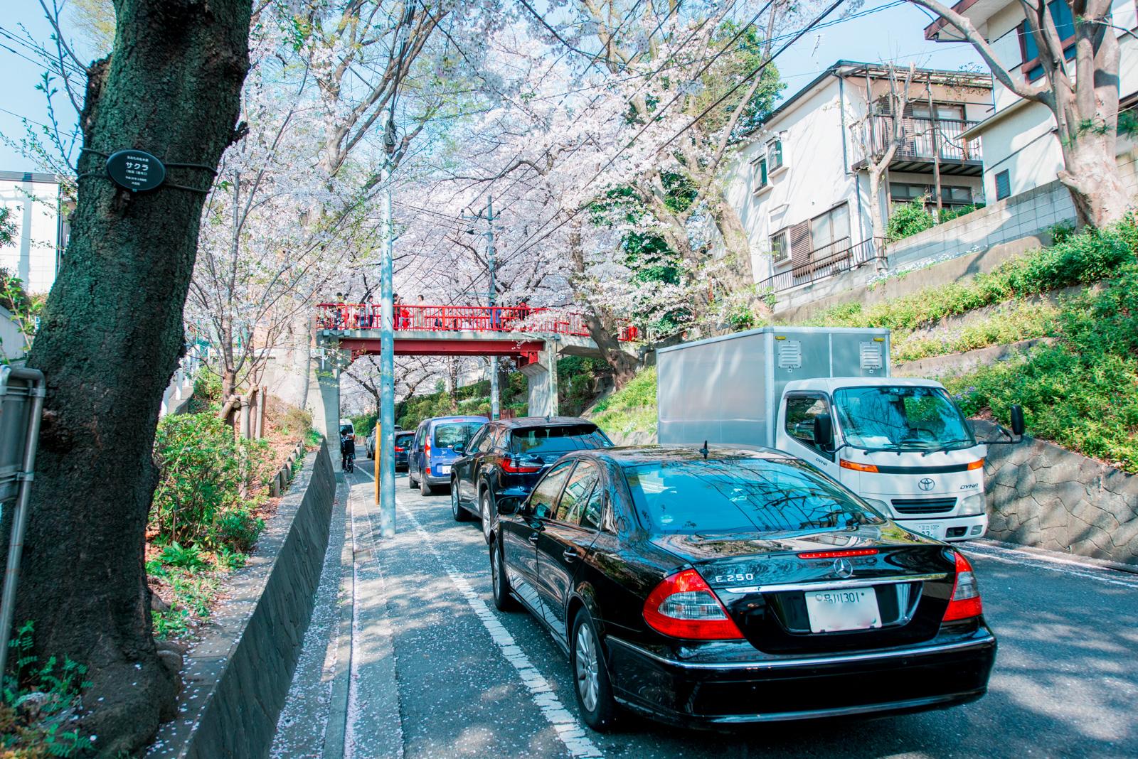 久々に、あの「桜坂」の桜が見たくて