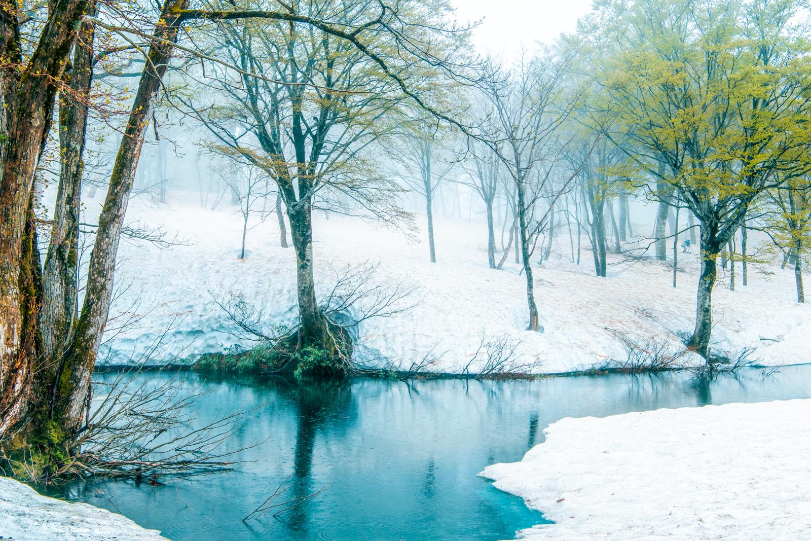 D850での撮影、楽しませていただきました。雨の山形、新緑と残雪の月山、一泊二日の撮影ツアー