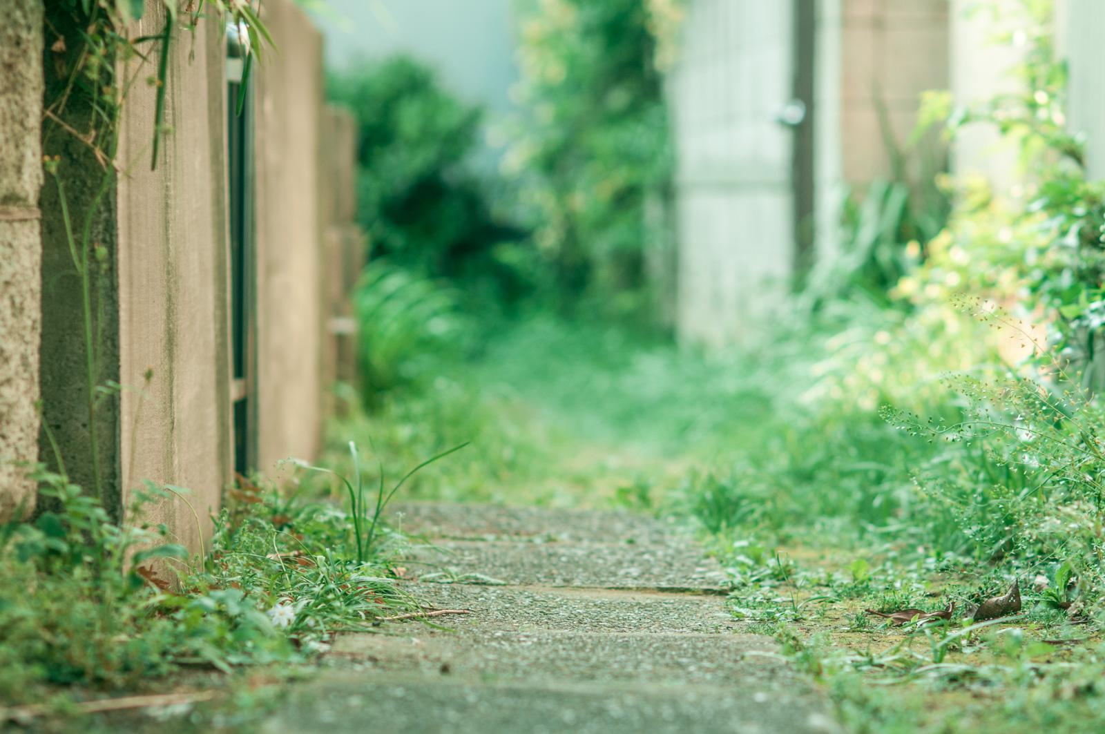 お散歩カメラ。見て感じてシャッターを切る、という当たり前のことを少しやってみてます