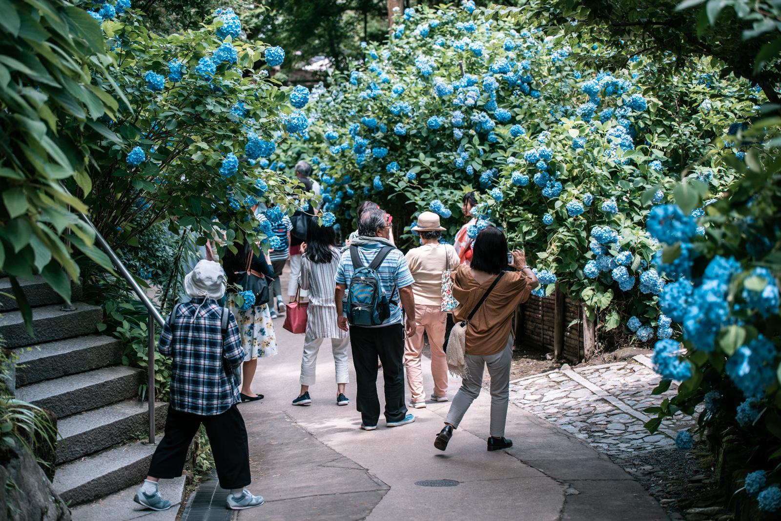 少し晴れ間が見えたので、北鎌倉から鎌倉までをぶらりと歩いてきました